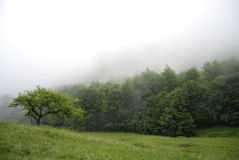 Foggy morning in mountain forest Royalty Free Stock Photos