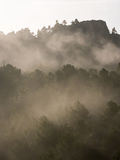 Foggy morning in the mountain forest Royalty Free Stock Photography
