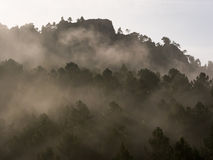 Foggy morning in the mountain forest Royalty Free Stock Photo