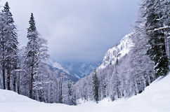 Foggy morning in the mountains, Slovenian Alps Stock Images