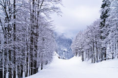 Foggy morning at mountains, Slovenian Alps Royalty Free Stock Photo