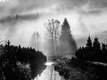 Foggy morning in the nature. Sun beams light through mist with tree silhouettes stock photos