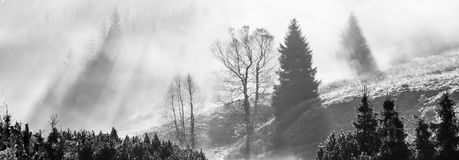 Foggy morning in the nature. Sun beams light through mist with tree silhouettes. Panoramic photography. Black and white image royalty free stock photo