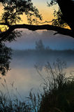 Foggy morning Royalty Free Stock Photo