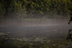 Foggy morning in the field in summer stock images