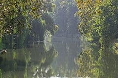 Foggy Morning Over The Canal In The Park In Zagan. Royalty Free Stock Photos