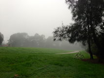 Foggy Morning in a park Stock Photography