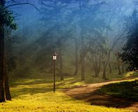 Foggy morning in the park. Quiet foggy morning in the park lit by the autumn sun royalty free stock photos