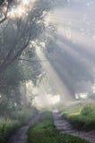 Foggy morning. Royalty Free Stock Photo