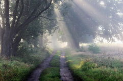 Foggy morning. Royalty Free Stock Images