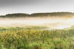 Foggy morning stock photo