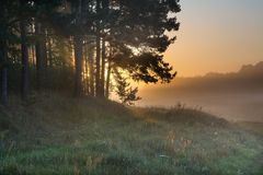 Foggy morning on polish meadow Stock Image