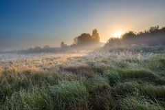 Foggy morning on polish meadow Royalty Free Stock Images