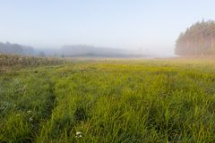 Foggy morning on polish meadow Royalty Free Stock Photography