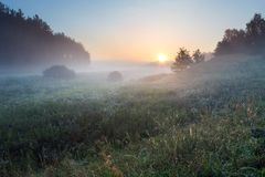 Foggy morning on polish meadow Royalty Free Stock Image