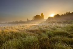 Foggy morning on polish meadow Royalty Free Stock Photos