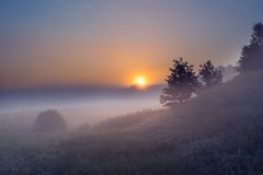 Foggy morning on polish meadow Stock Images