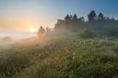 Foggy morning on polish meadow Royalty Free Stock Photo