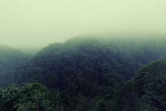 Foggy morning in the rain forest Royalty Free Stock Photos