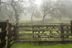 Foggy Morning, Ranch Fences and Oak Trees Stock Image