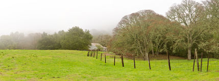 Foggy Morning, Ranch Fences and Oak Trees Panoramic Stock Image