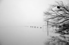 Foggy morning on river. In central Ukraine stock photos