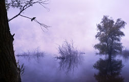 Foggy morning on the river. Royalty Free Stock Photo