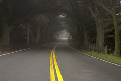 Foggy morning on the road. A tree shrouded road winding through the countryside royalty free stock photography