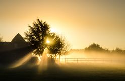 Sunburst behind a tree and a house. Foggy morning in rural dutch landscape with sunrays coming through a tree royalty free stock photography