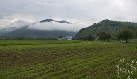Foggy morning, rural scene Stock Photos