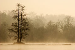 Foggy morning on Savannah river Stock Images