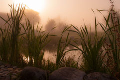 Foggy morning on the shore of the pond Royalty Free Stock Image