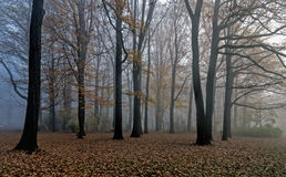 Foggy morning. Morning foggy sky in forest royalty free stock images