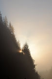 Foggy morning summer landscape with fir tree Stock Images