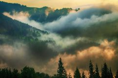 Foggy morning landscape royalty free stock photos