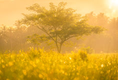 Foggy morning sunny landscape with tree Royalty Free Stock Image
