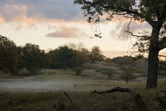 The Foggy morning. Sunrise at AWD (Netherlands) in a foggy field Royalty Free Stock Photography