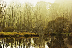 Foggy morning in a swamp royalty free stock images