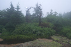 Foggy morning at the top of Cadillac Mountain in Maine with the Royalty Free Stock Images