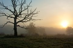 Foggy morning with tree Stock Photography