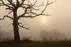 Foggy morning with tree Stock Photos