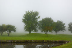 Foggy morning 2. Tree line on a foggy morning Stock Image