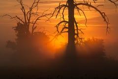 Foggy morning. Foggy morning with tree and sunrise Royalty Free Stock Image