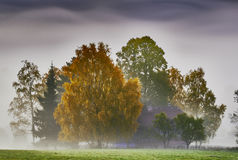 Foggy morning in the trees Royalty Free Stock Images