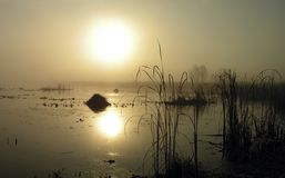 Foggy morning on Tulchinskom lake. The Moscow area royalty free stock image