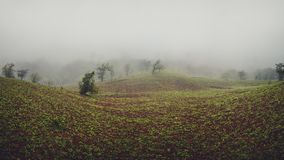 A Foggy Morning. View of a Foggy Landscape royalty free stock photography