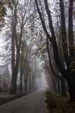 Foggy morning Royalty Free Stock Images