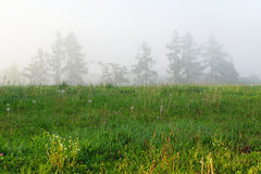 Foggy morning on wilderness Royalty Free Stock Images