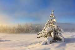 Foggy morning in the winter. Spruce in the snow against the backdrop of foggy forest in the mountains Stock Photo