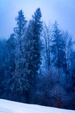 Foggy morning at winter forest royalty free stock photo